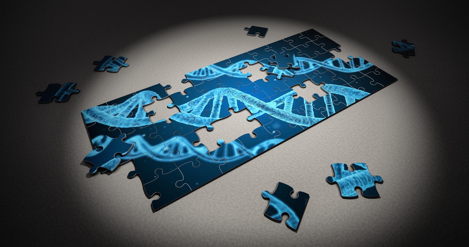 DNApuzzle